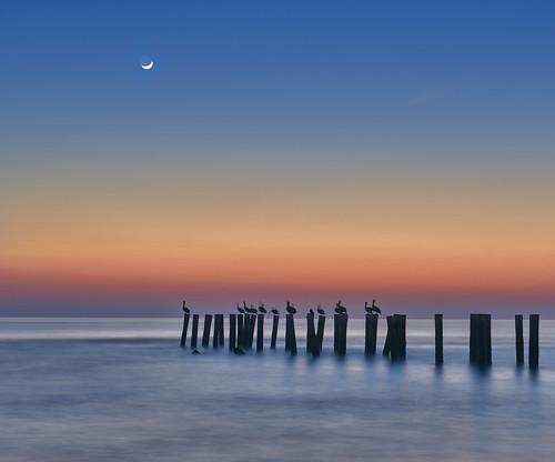 naples old pier florida usa nikon nikond810 joaofigueiredo joaoeduardofigueiredo water sea birds bird pelikan pelikans sunset