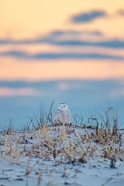 "Happy ""Owl-idays"" 😳😜🎅"