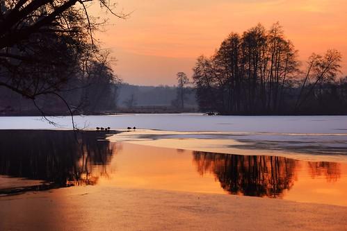 rochna tworzyjanki łódzkie lodzkie polska poland landscape view nature pond reflections tree trees sunset ice snow colours yellow orange white water animals ducks
