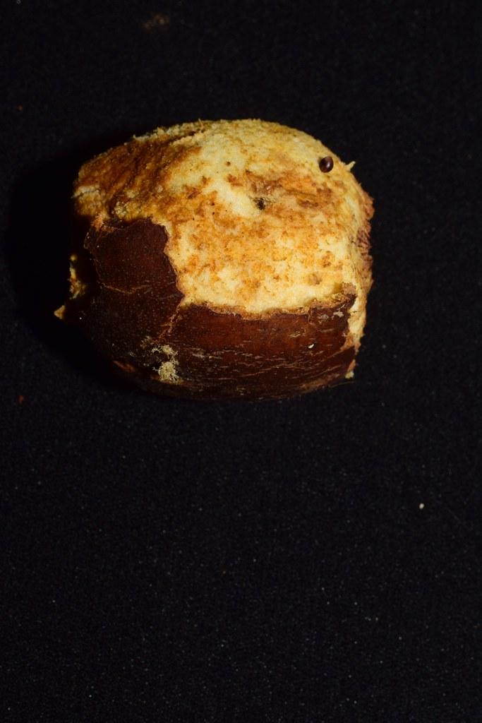 Socratea exorrhiza (Mart.) H. Wendl. * Palmito amargo - Chonta patona *
