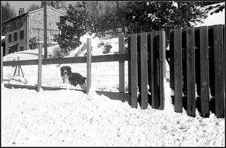 Saint Genest Malifaux dans la neige   Ilford Pan F 50 ISO  D76   5 février 2019  --041 | by Bokey Shutter