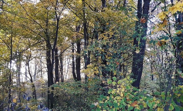 Autumn Fairytale 28
