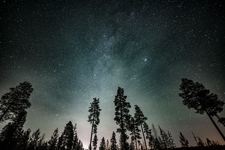 Milky Way Forest | by majonga