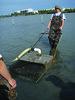 ClamHarvesting_pg10 by Florida Sea Grant