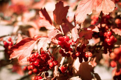 dacha berry ukraine travel nature полтавськаоблас украина полтавськаобласть ua