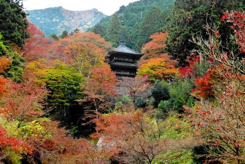 高源寺 kogenji tamba hyogo kansai japan 兵庫県 丹波市
