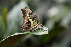 Papillons en Liberté 2019 - Photo 20