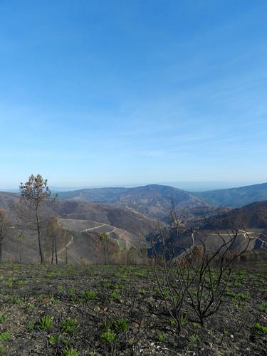coimbra portugal prt fires burnt forest mountains landscape dark black negrume
