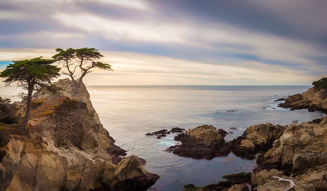 Lone Cypress - Textured HDR