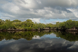 Mangroves | by TAZMPictures