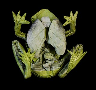 IOIO 2018 - Origami GLASS FROG!!! (from below)