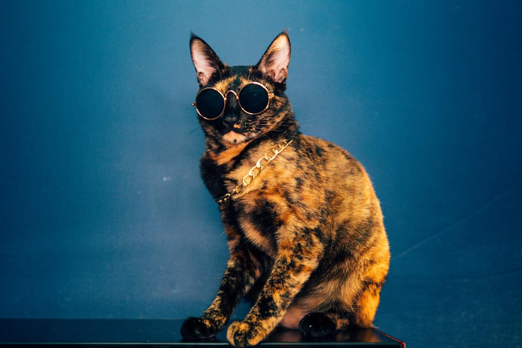 大ㄟ有嘻哈hip Hop Cat Facebookblogger Instagram 500px You