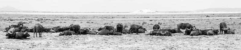 Kenya - 0693-Pano