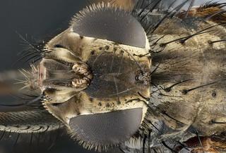 fly lomo 3,7x   by Aenima micro