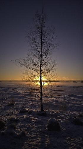 lumia1520 landscape sun sunrise tree nature outdoors sea frozensea espoo finland