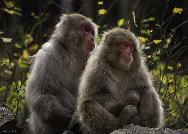 Monkey Portrait, part II: Inner Space