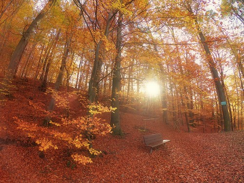 """A bench to """"Fall"""" on"""