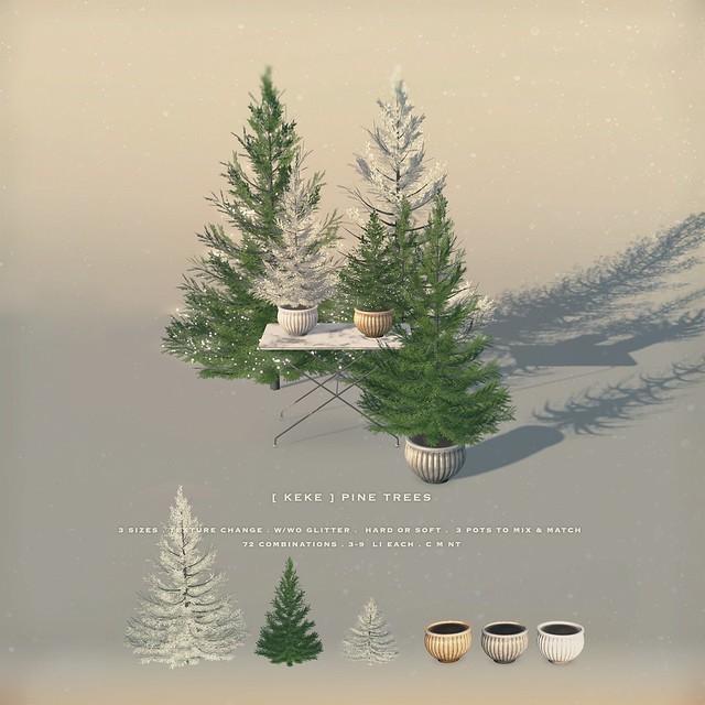 [ keke ] pine trees