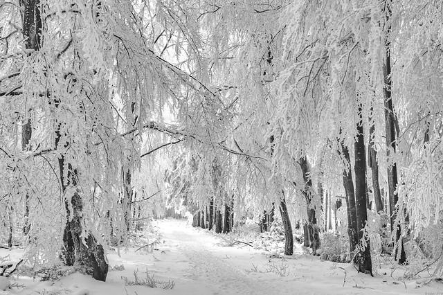 *winter wonderland*
