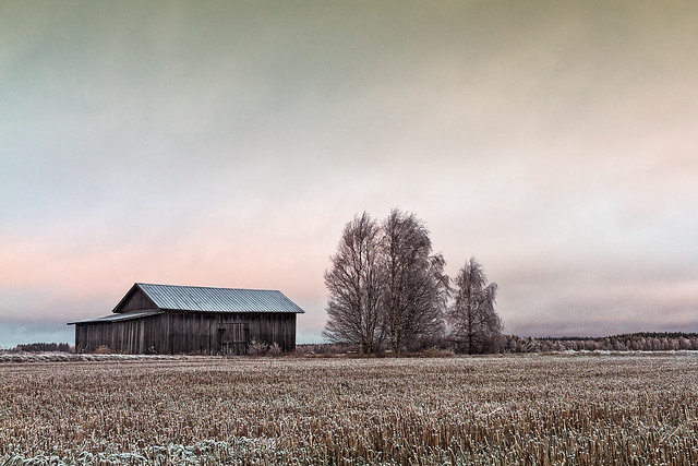 Old Barn House And Bare Trees
