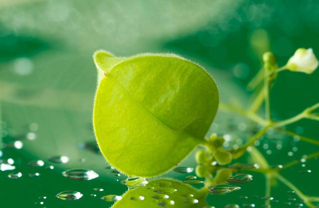 Macro Mondays theme/ Green