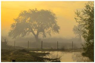 La Pampa, Argentina, amanece con niebla. La Pampa, en Argentine, se lève avec le brouillard.