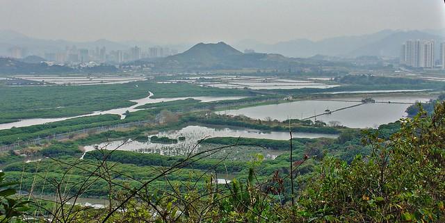 Mai Po Wetlands, New Territories, Hong Kong