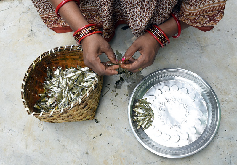 Urebashi Mallick preparing mola fish, Gobindpur village, Kantapada block, Cuttack, Odisha, India. Photo by Arabinda Mahapatra.