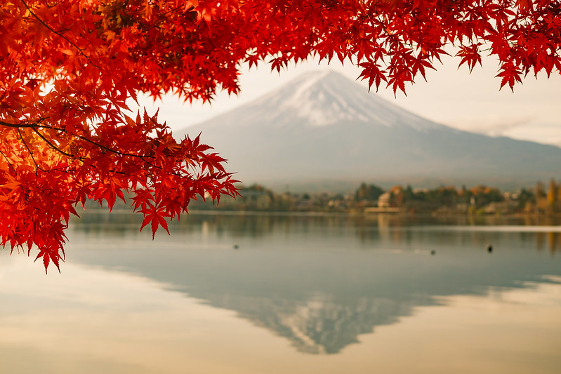 紅葉富士|Fujisan
