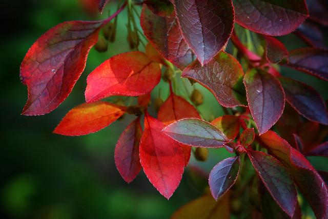 Autumn Colours series
