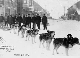 The Haywood & Cates two thousand-dollar dog team, Dawson, Yukon / Attelage de chiens d'Haywood et Cates, d'une valeur de deux mille dollars, Dawson (Yukon)