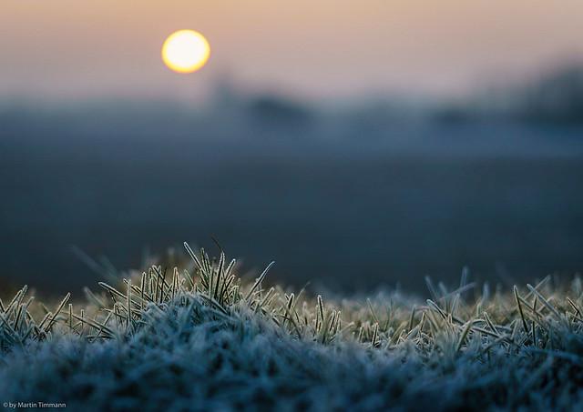 Winter - gefrorenes G>ras im Sonnenlicht