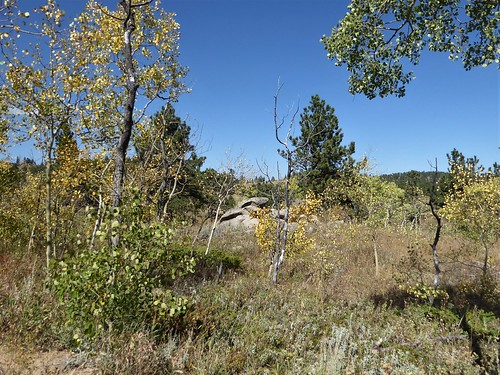 colorado nature flora plants fall landscape trees bushes