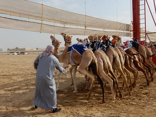 Al Marmoom Camel Racing Track - 13