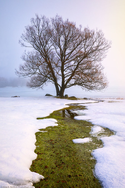 Maine Winter with Fog