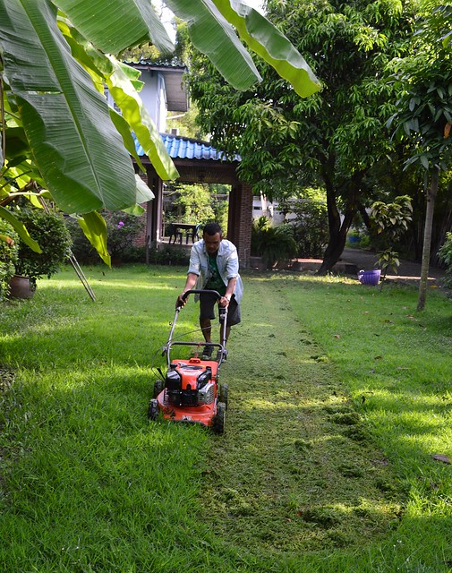 cutting the grass in the rainy season