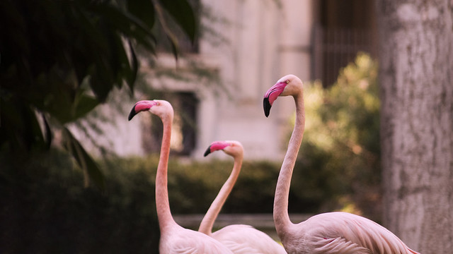 Invernizzi Villa - Flamingos
