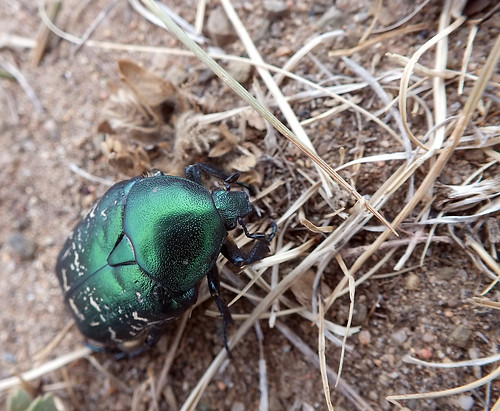 asia mongolia dragoman animal insect beetle overland landscape dana iwachow june july 2018