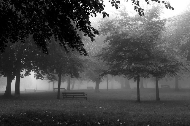 Benches in the Mist