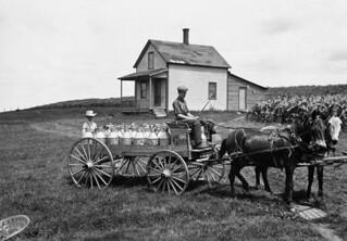 W.S. Armitage Dairy Farm, mule team, mare and colt, Ascot, Quebec / Ferme laitière W. S. Armitage, attelage (une mule et un poulain), Ascot (Québec)