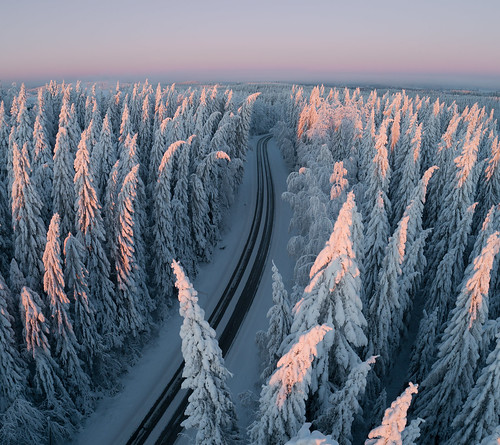 finland suomi jyväskylä winter aerial aerialphotography birdview phantom 4 pro phamton4pro fc6310 drone multicopter quadcopter kamerakopteri dronephotography forest trees snow