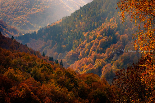 Fall in love | by Mario Graziano
