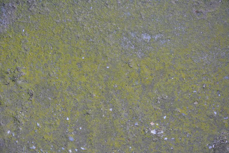 Mossy concrete texture #07