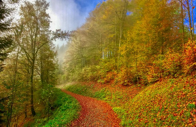 Autumn mist in the forests of Hocheck near Oberaudorf, Bavaria, Germany