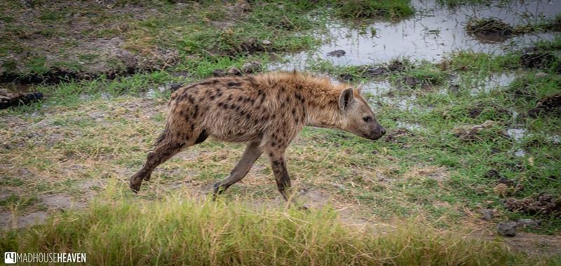 Kenya - 0740