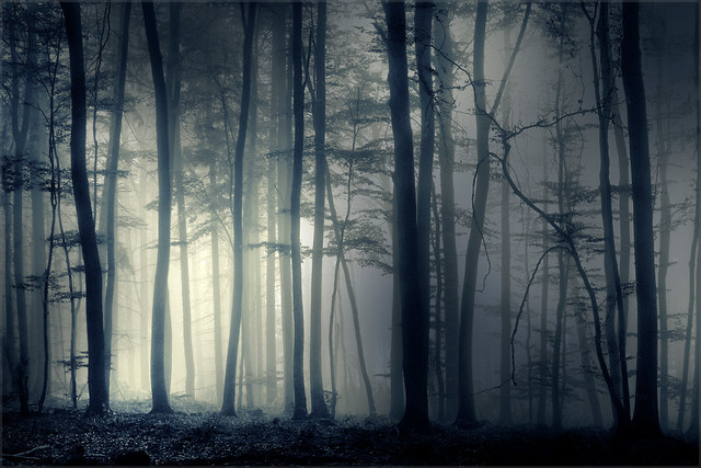 Mysterious woodland