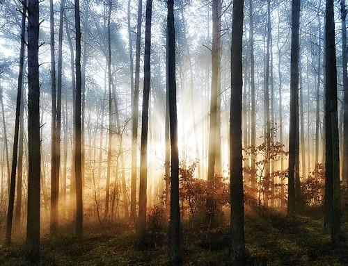 landscape krajobraz las forest woods trees day morning sunrise wschód słońca sunrays promienie nature przyroda polska poland europa europe niwki opolskie mobilephotography samsung galaxys7edge smg935f impression drzewa drzewo tree mgła haze rays poranek autumn jesień fall podzim november