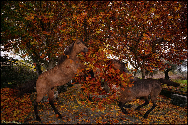 Horses playing with the fallen leaves