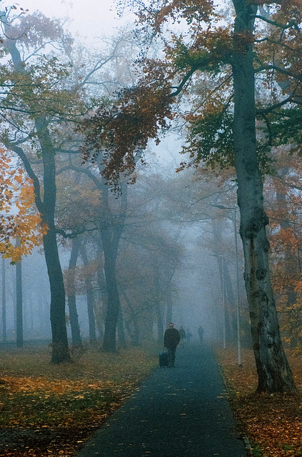 Foggy morning in late autumn