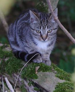 Kitten at the castle of Morsan | by stanzebla